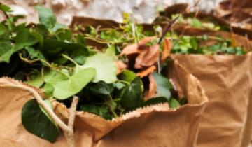 collectes-vertes-ete2021-suivi-actu_carre_site.png